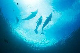 PADI Technical Diving