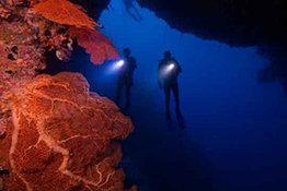 I Am a PADI Diver