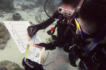 PADI Dive Master Program